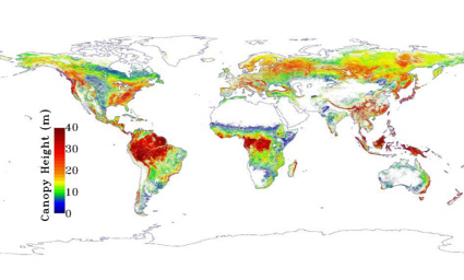 Satellite map of forest canopy height